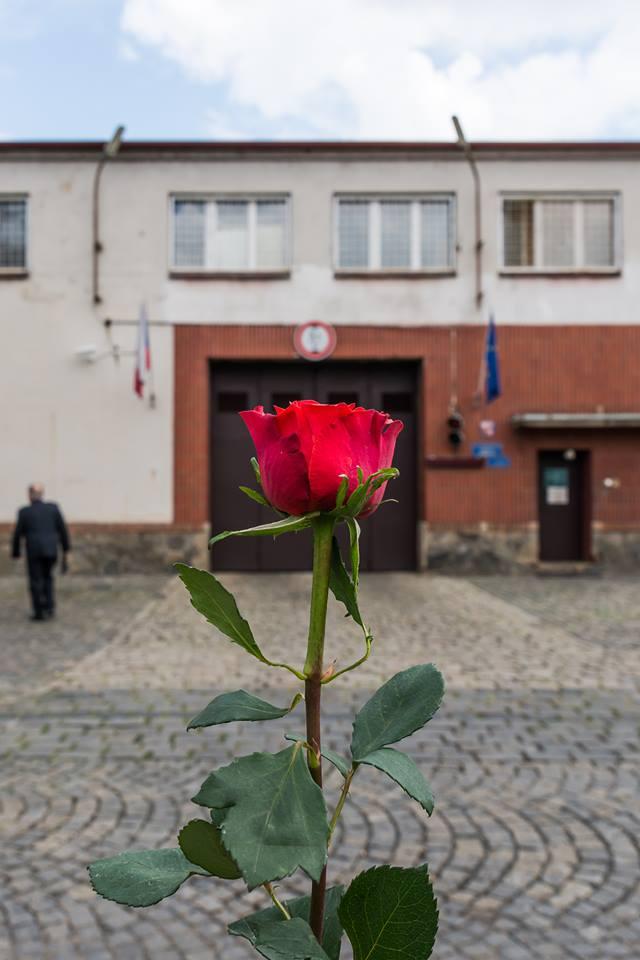 Růže od nás všech ze Společně to dáme, autorka fotky: Jana Plavec