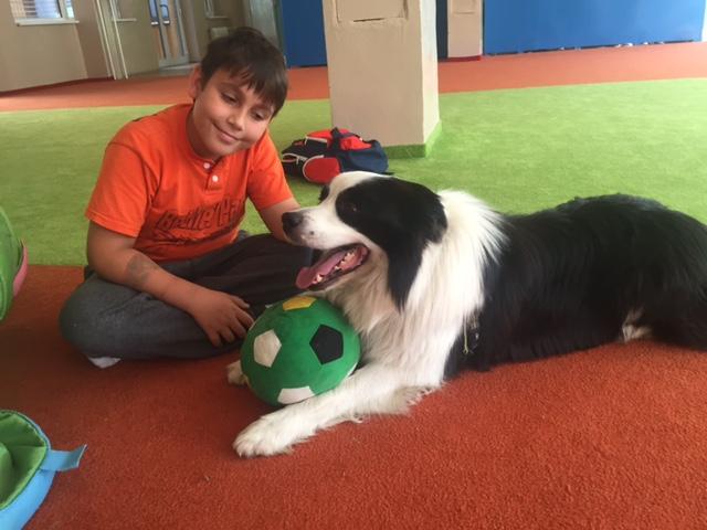 Pes Sunny je súčasťou ScioŠkoly. V jednom projekte mu deti samé navrhovali a stavali búdu. Na prvý pokus bola príliš malá. FOTO – Archív Scio