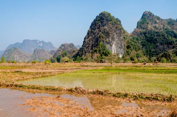 Domovem laoše je kras v laoské provincii Khammouan. Foto: Miroslav Bobek