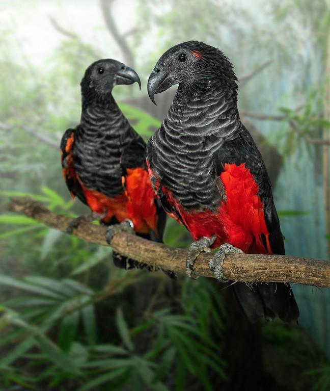 Jeden z výjimečných obyvatel Rákosova pavilonu - tricha orlí. Foto Zoo Praha
