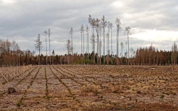 Foto 1: Dnes velmi častý obrázek v české krajině. Uschlé smrkové porosty, hromada dřeva, spousty těžebních strojů a vytěžené velké holiny, které budeme muset do budoucna zalesnit. Většina je ještě bez vysázených sazenic. Ale také holiny, které jsou opět zalesněny smrkem, který nejvíce trpí suchem a neustále se zvyšujícími se teplotami. Vysočina, 2020.