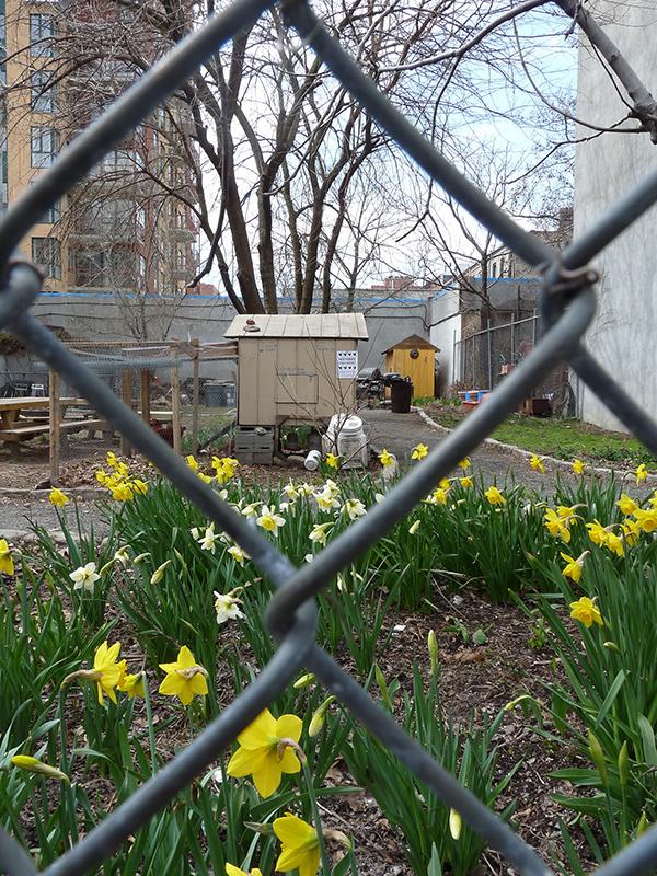 Komunitní zahrada Green Acres, Franklin Avenue, Brooklyn
