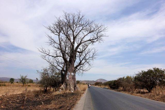 [Z od Kafue]Baobab u silnice