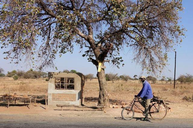 [Z od Monze]Cyklista s nákladem dřeva