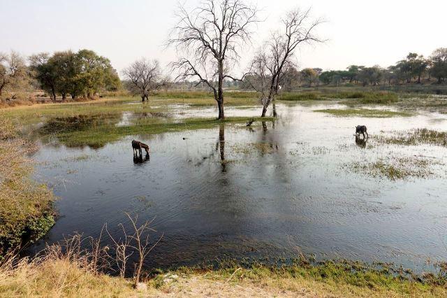[Motopi]Oslíci v řece Boteti
