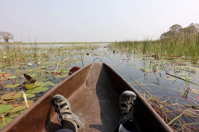 [Okavango Delta]Z mého pohledu to bylo na mokoro snadné, nic se nesmí vystrkovat z lodi, krokodýli číhají