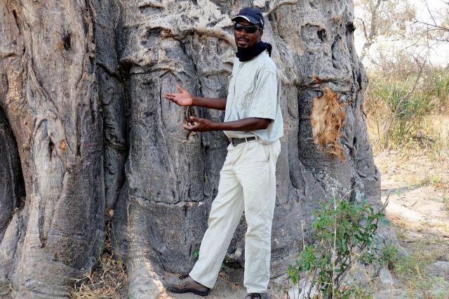 [Okavango Delta]Jay mi dělá přednášku o baobabu