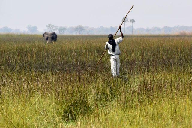 [Okavango Delta]Jay si jel pro vodu a slon pro Jaye