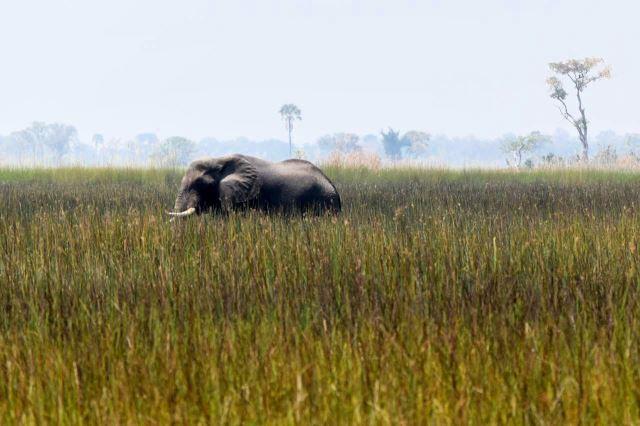 [Okavango Delta]Nakonec ten hujer odtáhl