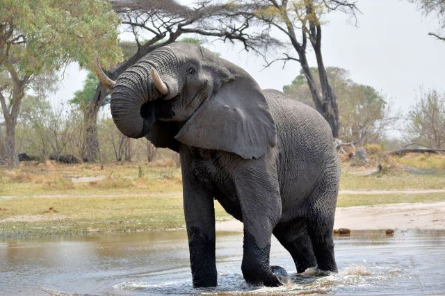[Moremi Game Reserve]Slon na nás dělá bububu, rychle jsme vypadli