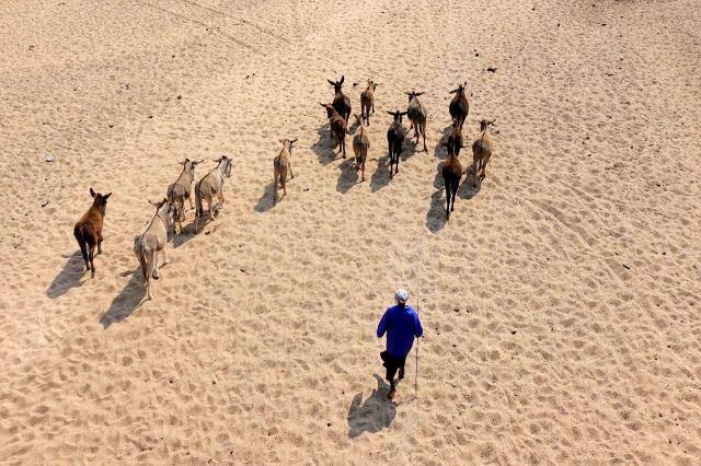 [Řeka Shashe]Pasačka oslů vyráží k napajedlu