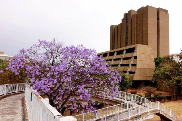 [Gaborone]Jaro se začalo projevovat
