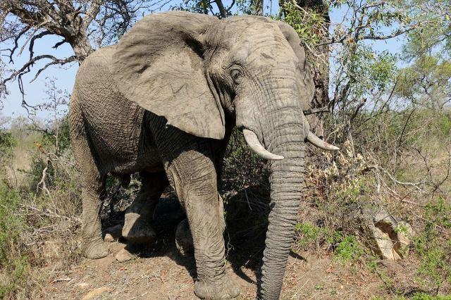 [Kruger National Park]Tomuhle chlapíkovi jsme nevoněli, museli jsme fofrem odjet