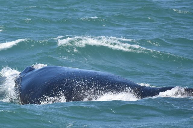 [Richards Bay]Dospělá velryba to je fakt macek
