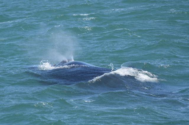 [Richards Bay]Velryba si odfoukla