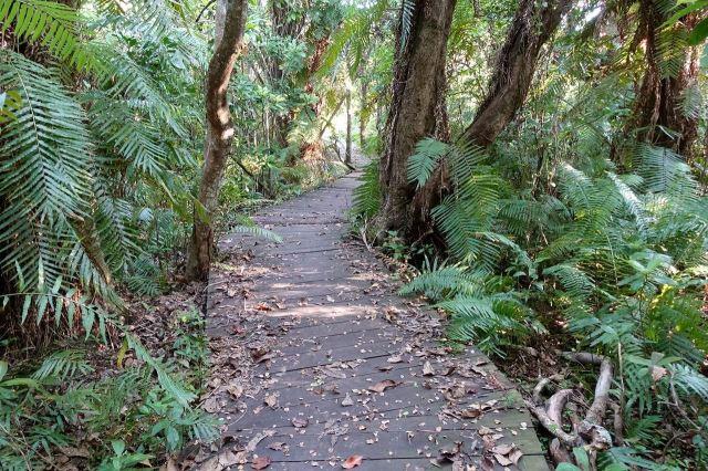 [Mtunzini]Raphia Palm Forest - dřevěný chodník přes močál