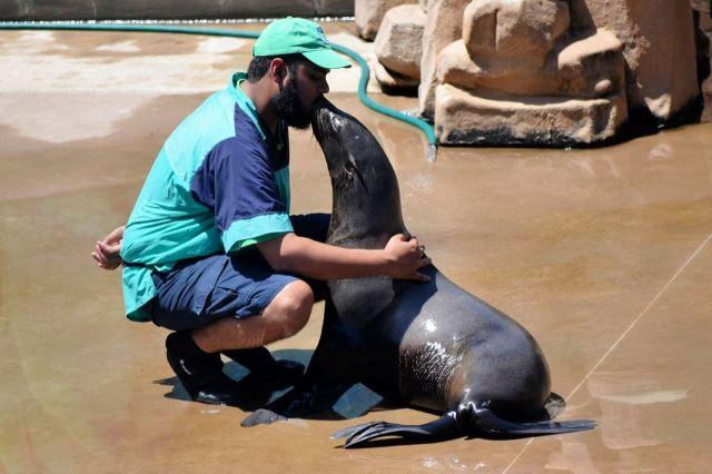 [Durban]uShaka Marine World - lachtan líbá svého cvičitele