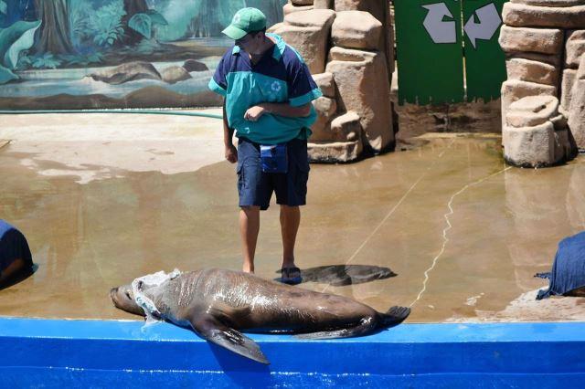 [Durban]uShaka Marine World - lachtan dělá mrtvého po náročném výkonu