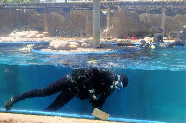 [Durban]uShaka Marine World -čistění bazénu
