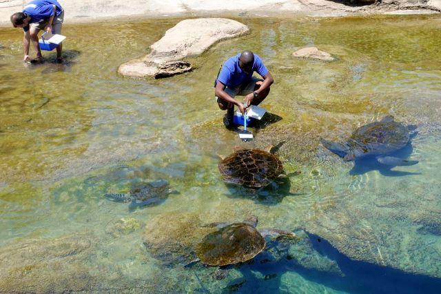[Durban]uShaka Marine World - krmení želv