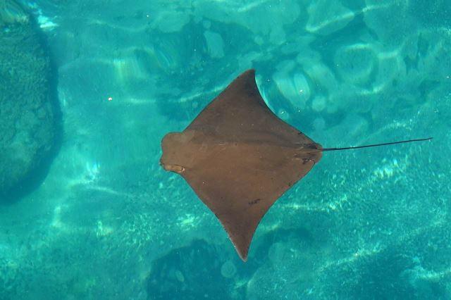 [Durban]uShaka Marine World - rejnok