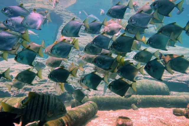 [Durban]uShaka Marine World - akvárium - hojnost ryb