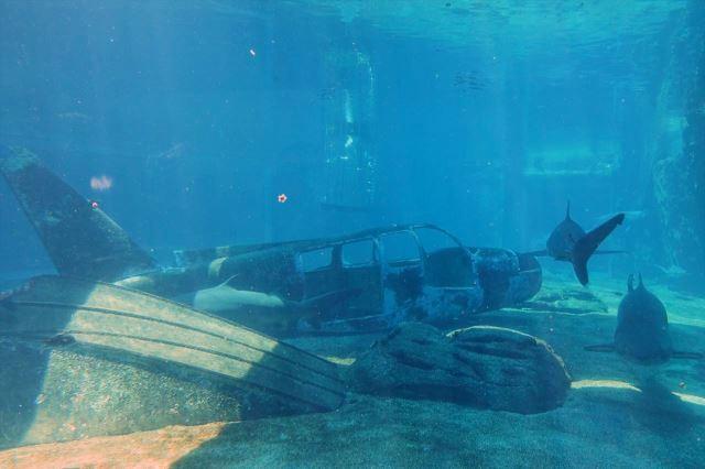 [Durban]uShaka Marine World - akvárium - žraloci u vraku letadla