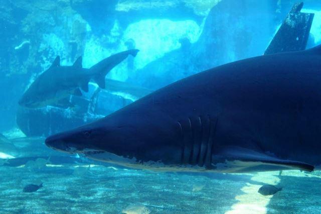 [Durban]uShaka Marine World - akvárium - žraloci