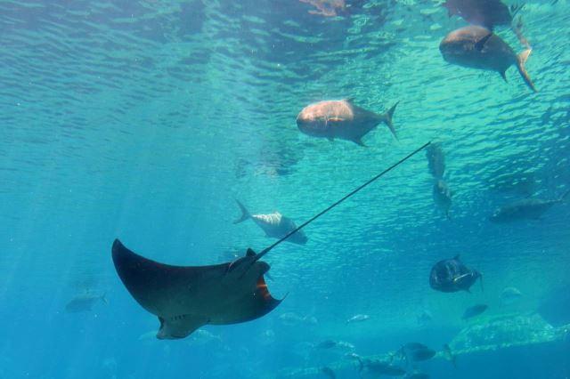 [Durban]uShaka Marine World - akvárium - rejnok