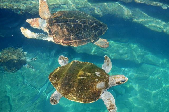 [Durban]uShaka Marine World - želvy