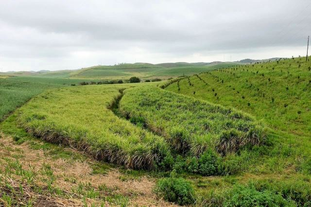 [Poblíž Esperanza na R102]Zemědělská krajina