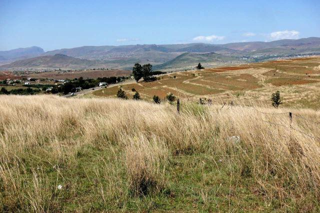 [Z od Mount Ayliff]Typický travnatý porost