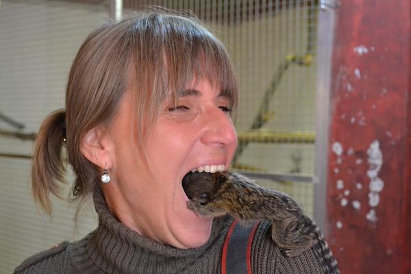 Zubní prohlídka malou opičkou